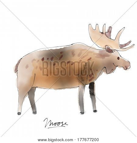 Moose. Watercolor animal drawing collection