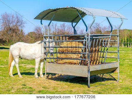 forage horse white pallet stallion farm ranch
