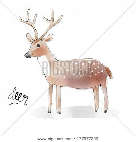Deer. Watercolor animal drawing collection