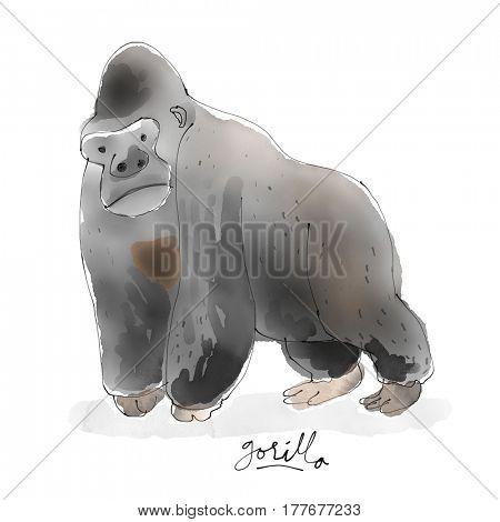 Gorilla. Watercolor animal drawing collection