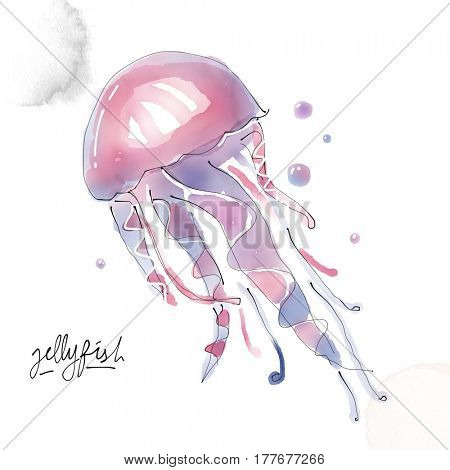 Jellyfish. Watercolor animal drawing collection