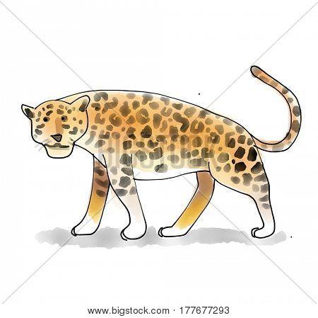 Jaguar Watecolor Animal illustration set