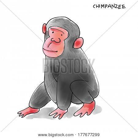 Chimpanze Watecolor Animal illustration set