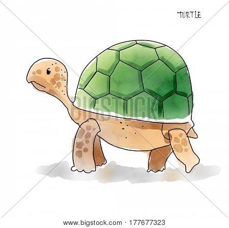 Turtle Watecolor Animal illustration set