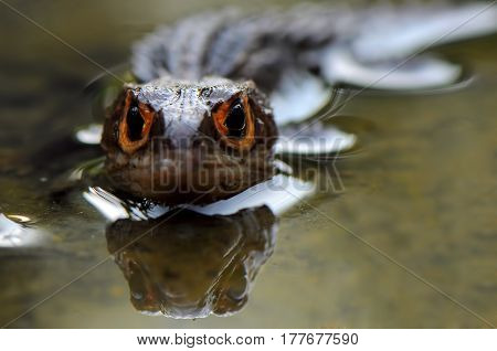 Face off with croc skink In the Water poster