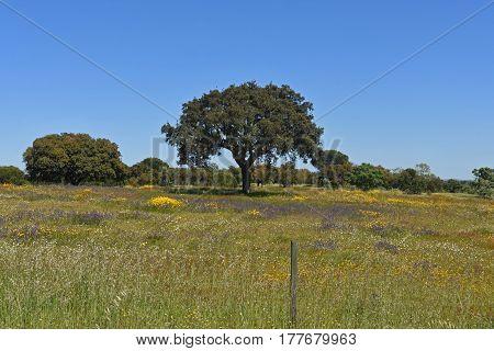 Spring Landscape Of Alentejo Landscape Between The Village Of Flor Da Rosa And Alpalhao, Alentejo Re