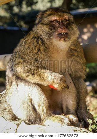 Closeup full face image of a sitting monkey