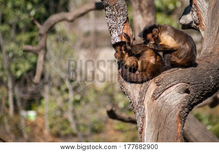 Image of two yung monkeys playing on a tree