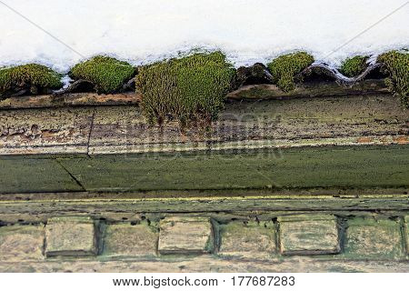 Moss on the wall under the snow-covered roof