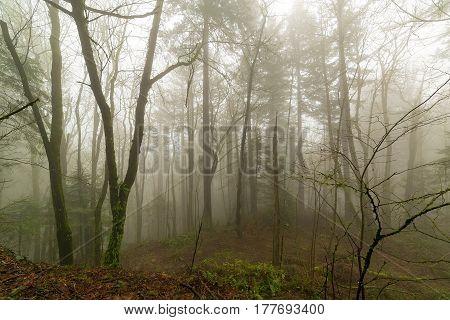 Oregon Pacific Northwest foggy morning misty forest scene in winter season
