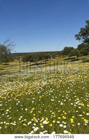 Spring landscape of extremadura landscape near the village of Valencia de AlcantaraCaceres province extremadura Spain