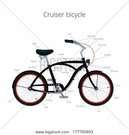 Cruiser bicycle infographic elements and parts isolated.