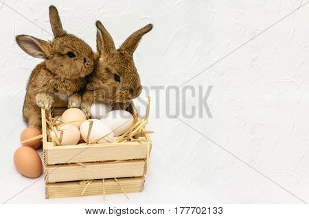 Cute little Easter bunnies with wooden box full of Easter eggs. Easter card with concrete white background. Easter bunny with Easter basket. Bunny and basket rabbit. Farm rabbits. Easter Bunny concept.