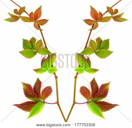 Composition Of Multicolor Twigs Grapes Leaves
