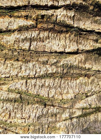 Close up of the bark of a tree showing cracks and lines to create a beautiful pattern. With space for text.