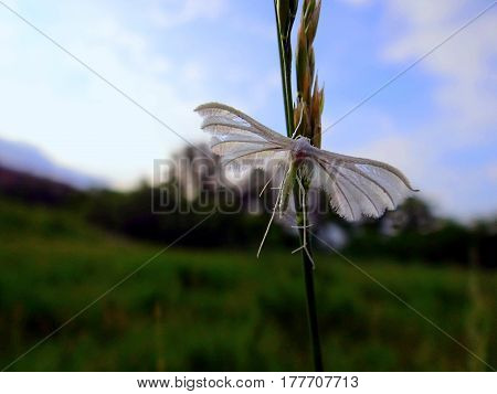White butterfly on a green blade of grass