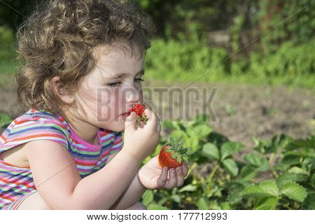 In summer a bright sunny day in the garden a little funny girl eats strawberries.