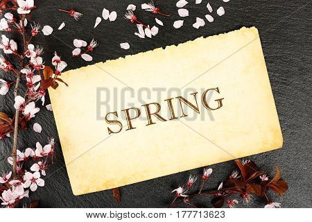 spring written on aged paper with almond tree twig on stone texture