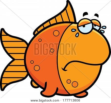 Crying Cartoon Goldfish
