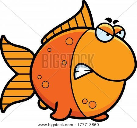 Angry Cartoon Goldfish