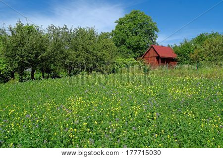 small red wooden hut on the meadow with flowers