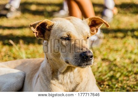 Close portrait of a mixed breed dog