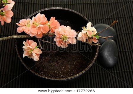 Spring flowering quince with bowl of and black stone