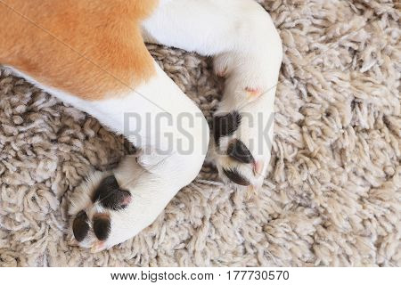 White Dog's Paws From Above