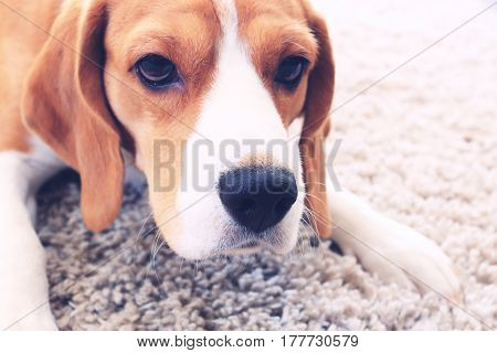 Dog's Face Close-up