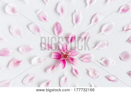 white backgroung filled with round pattern of sakura floweds. Concept of love and spring. flat lay. top view.