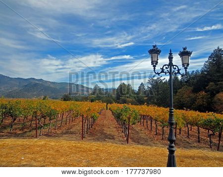 Panoramic Vineyard View with an Antique Lamppost