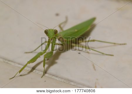 Happy Grasshopper Smiling while Chilling on a Nice Cool Spring Evening