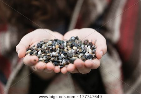Female palms holding grey brown and white pebble with pebbles in sharp focus and palms and background blurred