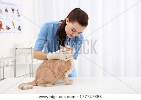 Pretty young veterinarian examining cat in clinic