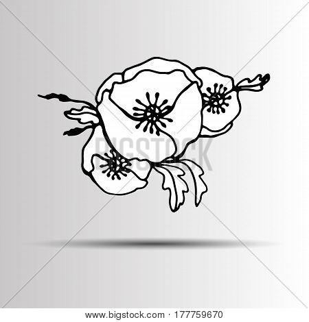 poppy nature flower vector plant pattern drawing illustration design