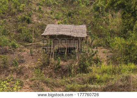 Green Terraced Field and hut in northern, Thailand