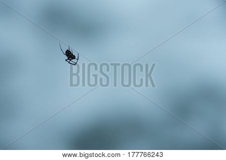 Close up of dangerous looking black spider hanging upside down from its web with very soft focus background.