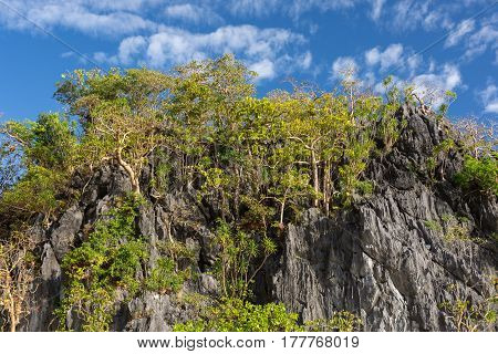 Upwards view of a volcanic stone cliff face with tropical trees growing and a blue sky with light clouds background.