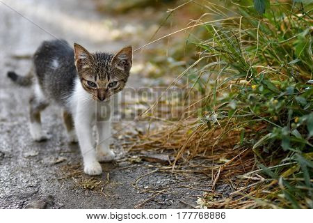 Cute Stray Kitten