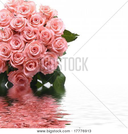 Bright pink roses with reflection