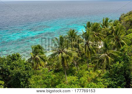 Elevated Island View Over Palm Trees