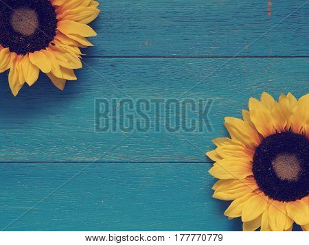 Two sunflowers on a blue vintage wooden background