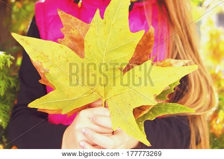 Hands Of A Girl Holding Autumn Leaves,