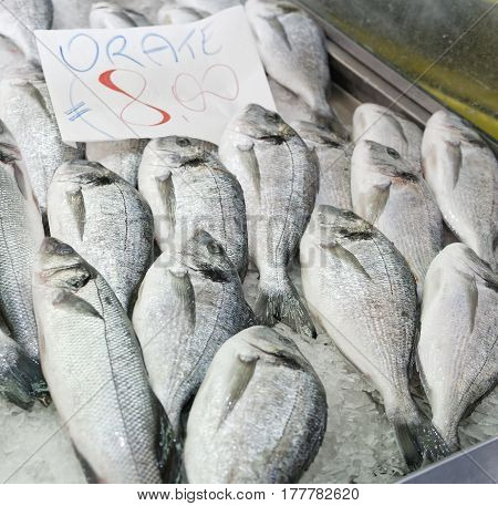 detail of italian Sparus aurata fish at a fish market