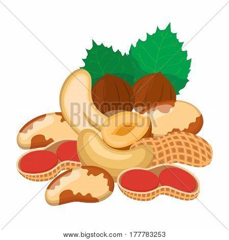 Different nuts set. Snack mix - peanut, brazil nut, cashew, hazelnut. Carton flat style.