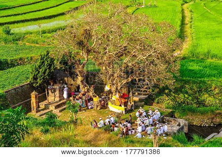 TIRTAGANGGA, INDONESIA - SEPTEMBER 30, 2012: Traditional spiritual celebration taking place on a rice field near Tirtagangga in Bali Island Indonesia