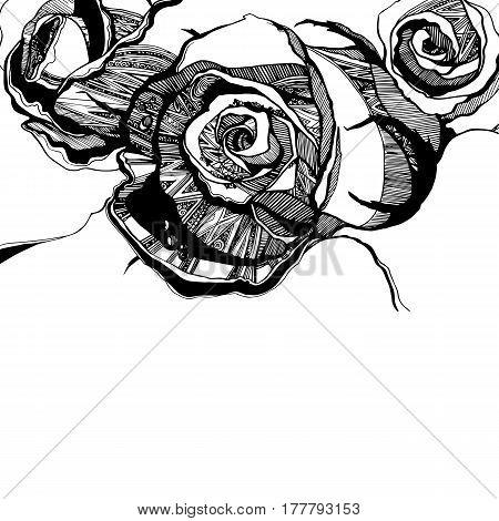 floral, flower, rose, spring, summer, background, botanical
