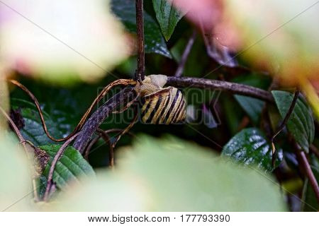 Insect among the branches of silt in the summer garden