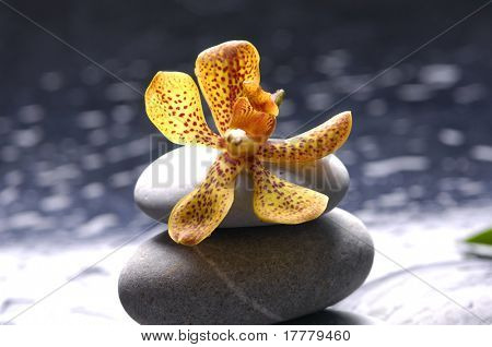 Spa still with beautiful orange flower