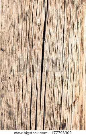 Surface Of Old Wood. Texture With Cracks